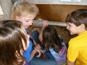Milking a cow at Hillcrest Farm